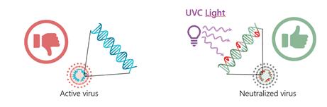 UVC irradiation